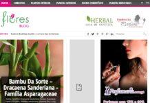 Blog Flores